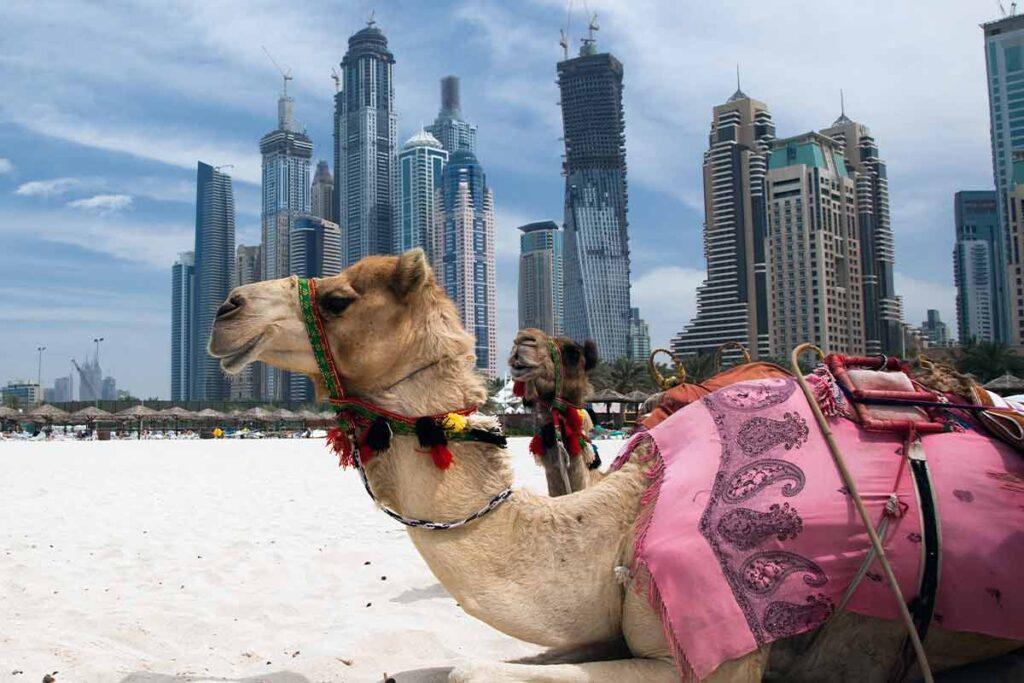Wiza do Dubaju, Wycieczka. DSO